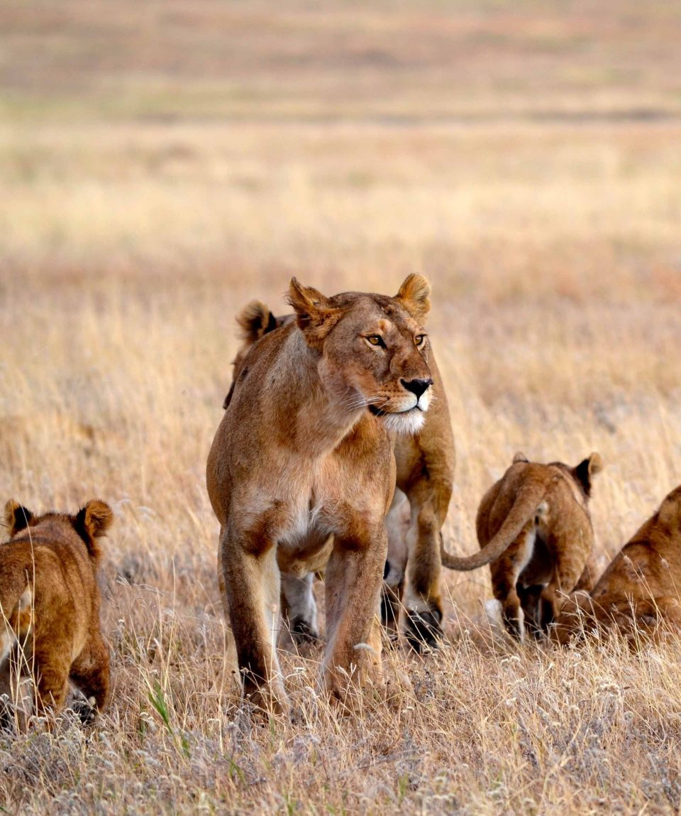 Serengeti ©Allan-Earnshaw