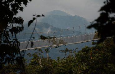 Canopy Walk Nyungwe Forest