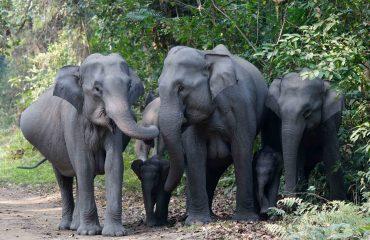 Olifanten Kaziranga met dank aan Dhr. Stam