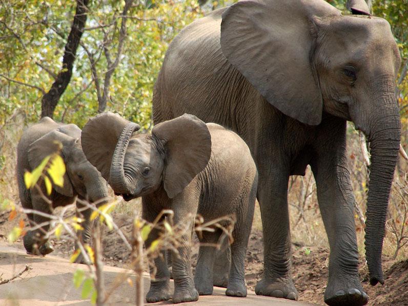 olifant Malawi, reis Malawi