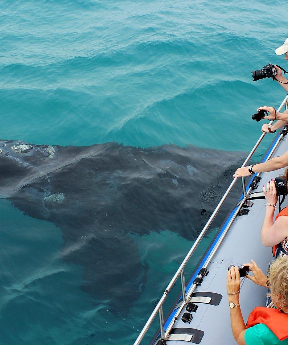 Zuidkaper met Dyer Island Cruises