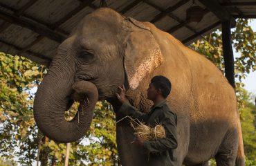 Elephant camp, Karnali lodge