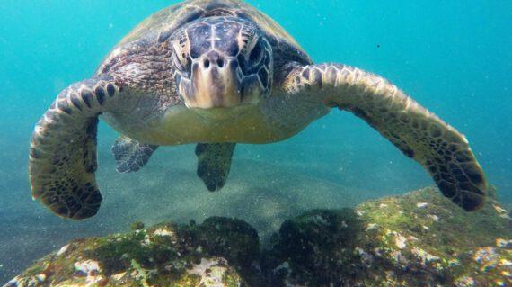 Galapagos onder water