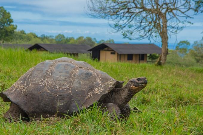Galapagos Magic Camp