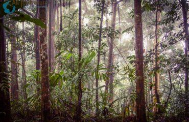 Regenwoud Papoea