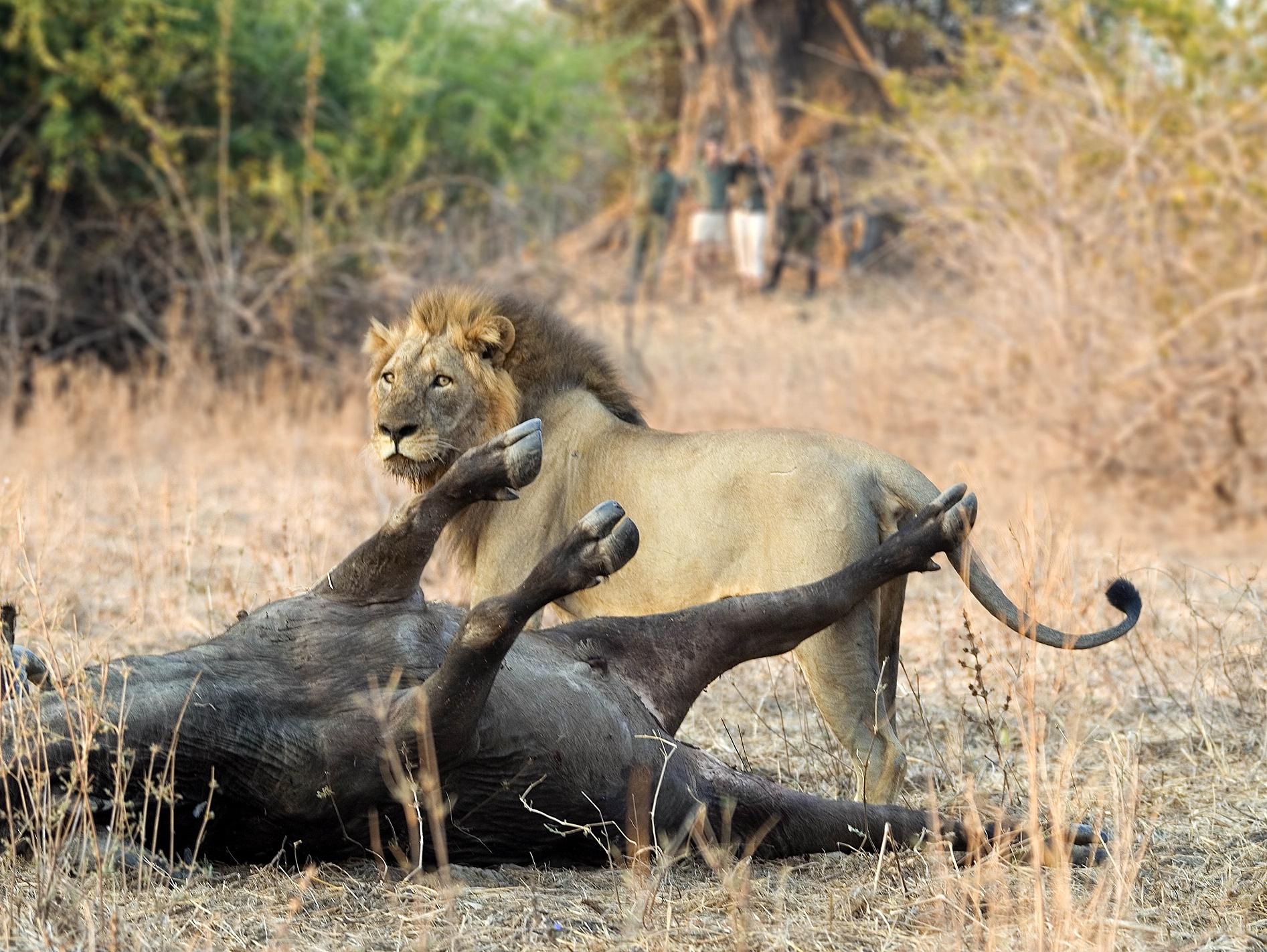 wandelsafari Zambia