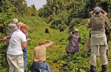 Fotograferen bij gorillatrekking © All for Nature Travel