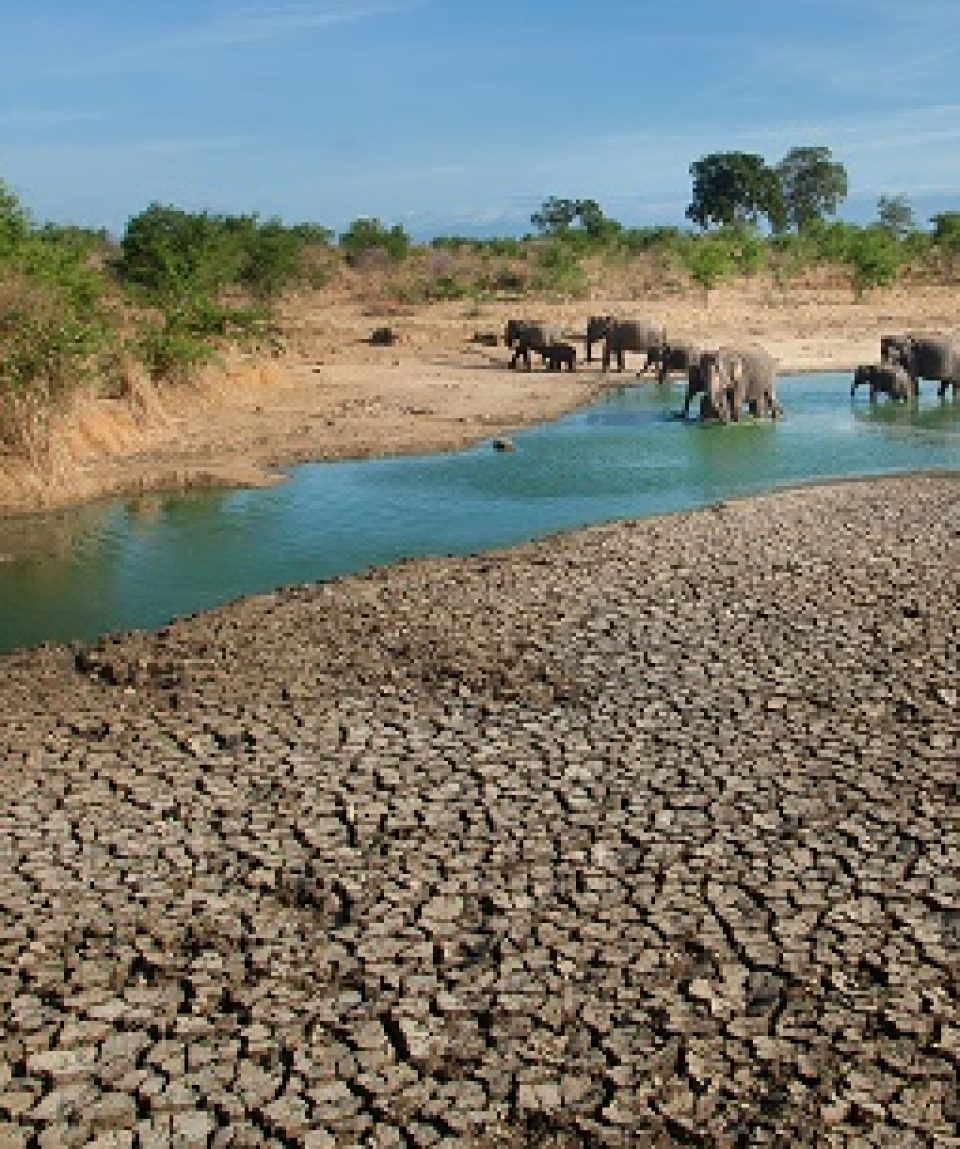 Olifanten in Udawalawe