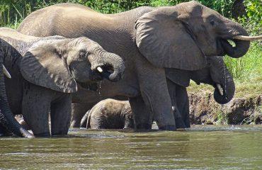 Olifanten Lower Zambezi © All for Nature Travel