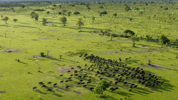 Selous Buffels vanuit de lucht