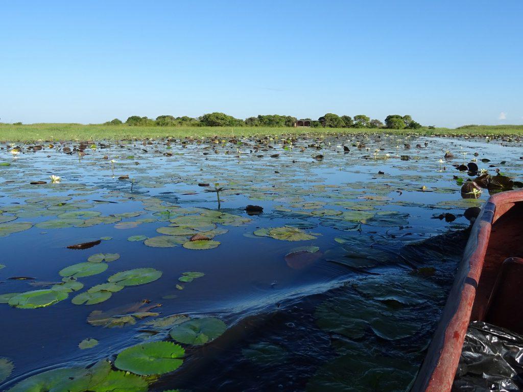 Shoebill Island Camp, African Parks, Bangweulu reis