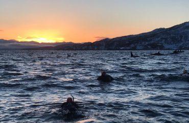 Snorkelen orka Noorwegen