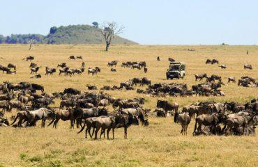 migratie Serengeti ©Asilia
