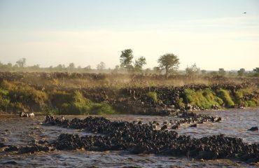 Wildebeest-crossing-mararivier ©Asilia