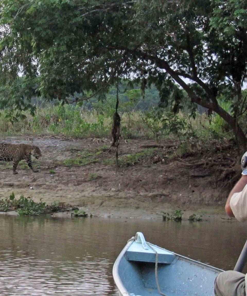 Spotting the Jaguar bij Araras