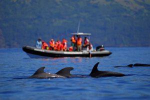 whale watching Pico, Talassa
