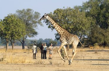 Best Walking Safari