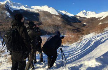 Groepsreis op zoek naar de wolven