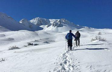 In de sneeuw op zoek naar wolvensporen