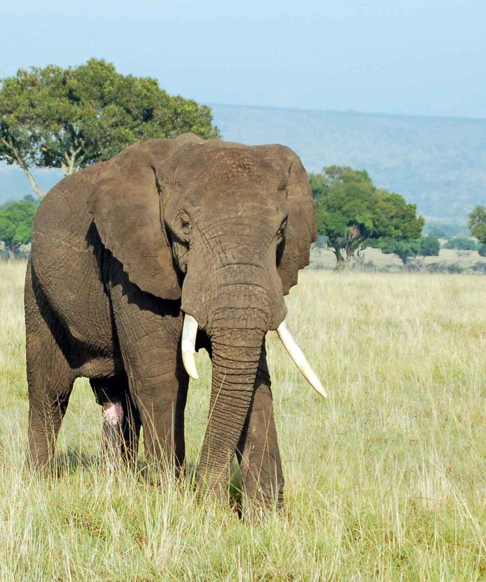 olifant mara © All for Nature Travel