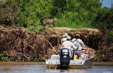 jaguar bootsafari Pantanal