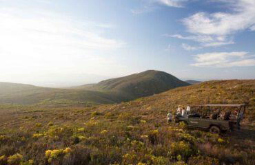 Grootbos safari