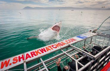 Shark Cage Diving bij Grootbos