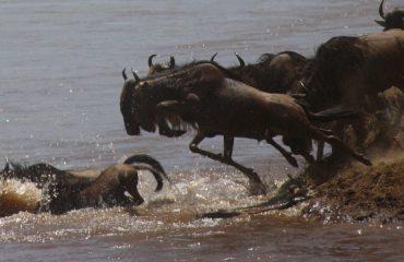 river-crossing-Serengeti ©Asilia