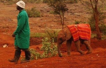 Sheldrick Elephant Sanctuary © All for Nature Travel