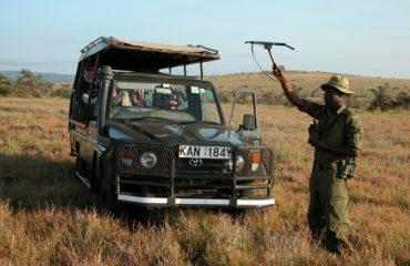 Lion Tracking Lewa Conservancy Kenia