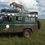Serengeti Cheetah Project