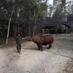 Sumatran Rhino Sanctuary harapan