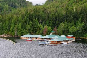 Knight Inlet Lodge, beren lodge