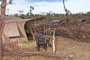 Dorobo Bush Camp, Mara Naboisho Tent Wide Shot_edited-1