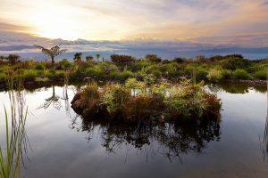 Rondon Ridge Lodge, Mount Hagen region. Papoea New Guinea.