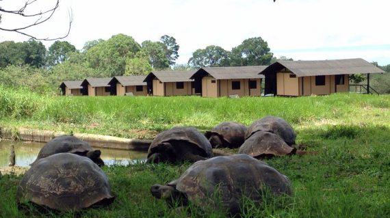 Reuzenschildpad bij Galapagos Magic