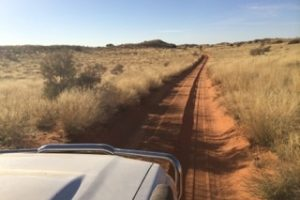 selfdrive Namibie, selfdrive in Kgalagadi