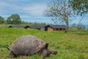 reuzenschildpad Galapagos, Santa Cruz, safaritent, Galapagos Magic