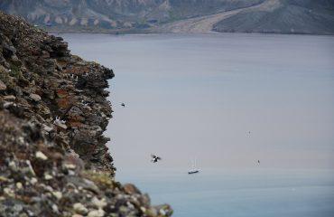 Bird cliff Spitsbergen