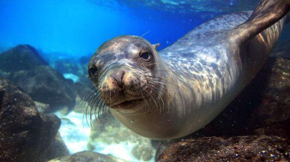 Zeeleeuw Galapagos, Jonathan Green