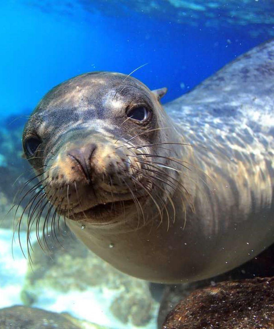 zeeleeuw Galapagos