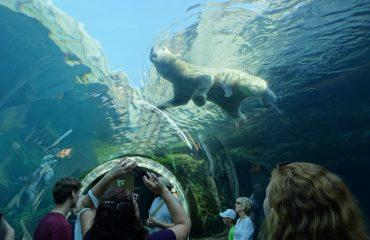 ijsbeer Assiniboine Zoo Winnipeg