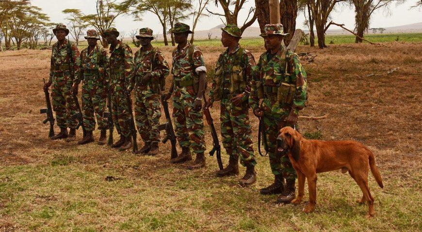 Dog Patrol Unit Lewa
