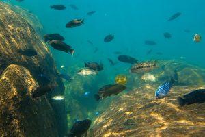 Lake Malawi Pumulani onder water