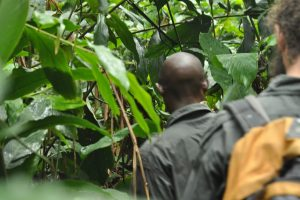 Ngaga Camp, Congo, Odzala, gorilla trekking