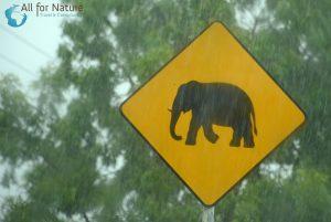 olifantenreis Sri Lanka
