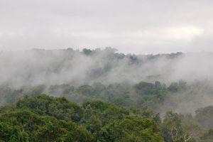 Cristalino lodge, amazone, alta florest