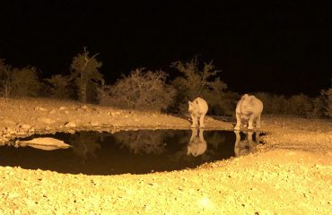 Waterhole Ongava Lodge ©All for Nature Travel