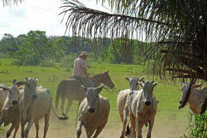 Pousada Aguape, Pantanal reis, wildlife, brazilie