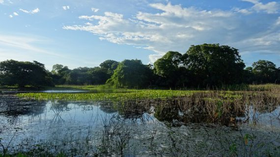 Pantanal, grootste wetland ter wereld